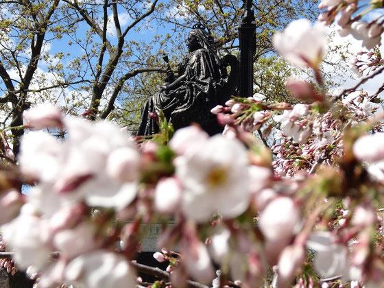 Frühling in Toronto: Queen Victoria inmitten von Kirschblüten im nach ihr benannten Queen's Park.