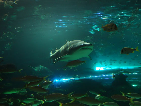 Besuchermagnet in Ripley's Aquarium of Canada: Die Haie ziehen auch abends noch Gäste an.