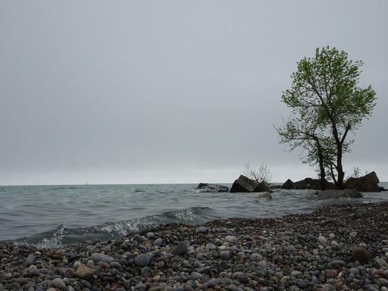 Besuch am Lake Ontario: Stillleben mit Baum am Ufer des Ontariosees.