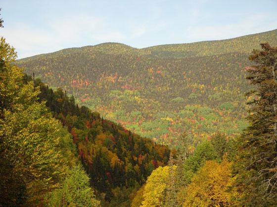 Indian Summer in Quebec: An diesem Berg im Gaspesie-Nationalpark sind von Hellgrün über Gelb, Orange bis Rot alle Herbstfarben (Fall Colors) vertreten.