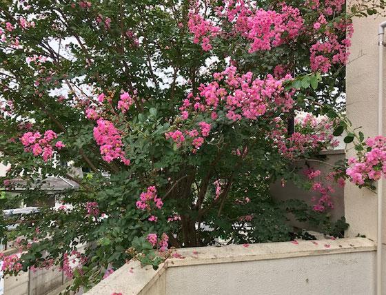 ☆打ち合わせを終わって通路の向こう側にはこんな花が…。