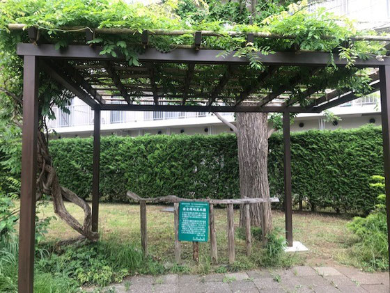 ☆バス停の藤棚?には緑が。