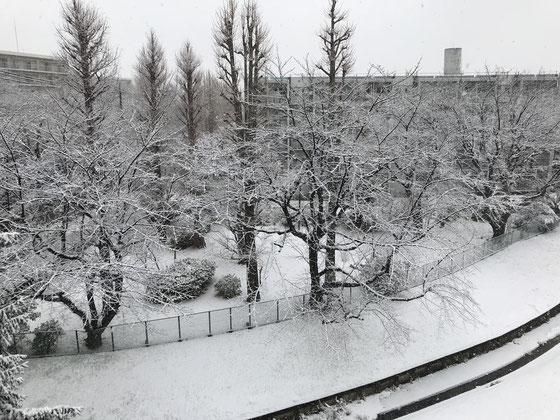 ☆出かけたのは9:34まだ小雨。帰宅は13:55こんな雪景色。