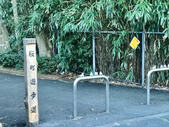 ☆打合せの帰途バスの車窓から見えた桜町遊歩道の車止め。