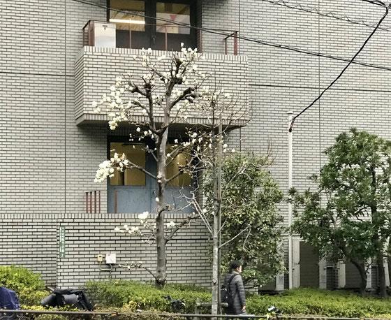 ☆日本医科大学付属病院前から千駄木二丁目に向かう途中。