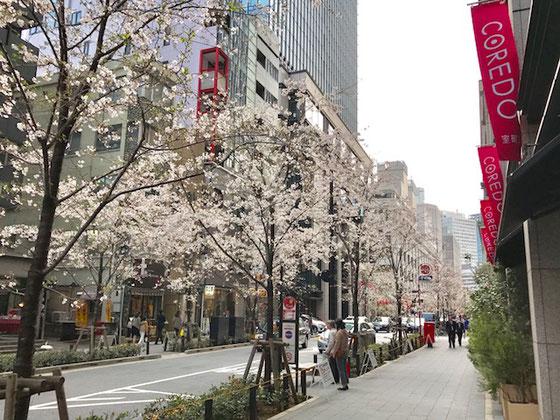 ☆写真は地下鉄三越前駅を上がった「COREDO1」の横の通り。首都高速1号上野線側から見た風景。桜並木が少し若葉がちらほら。