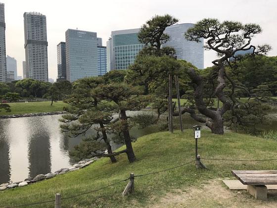 ☆隅田川の橋を14もくぐりぬけ約35分で浜離宮恩賜庭園。広い庭園。都内の喧騒から離れて静かです。