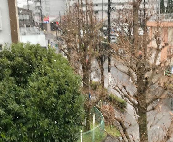 ☆14日土曜日14:43。めずらしくボタン雪が舞ってます。写真では雪とはわかりにくいです。