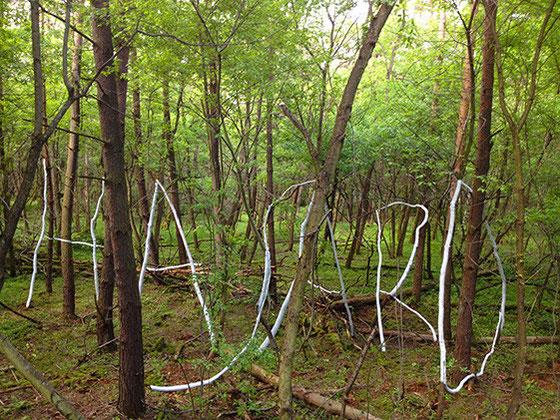 Faux et usage de faux, arbres, chaux, et branches, Sablières d'Oberhoffen, 2013.