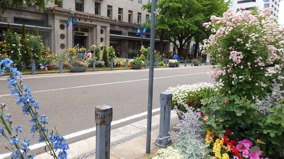 お薦めの日本大通り。ライトアップするらしいので夕暮れ散歩に見に行こう・・・