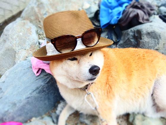 フーテンの戌さん 2015年夏 道志川にて  「なぁに、大丈夫だよ」