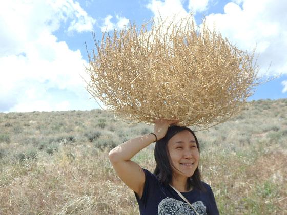 Dr. Yumiko Esaki 2018 Reno, Nevada これ、Sagebrushだと思ってたけど違うみたい?