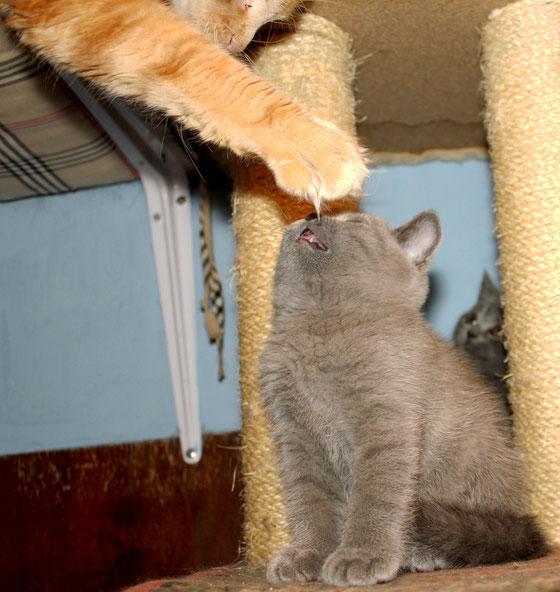 Перст божий в кошачьем мире.