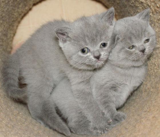 Кот от рождения и до гробовой доски.