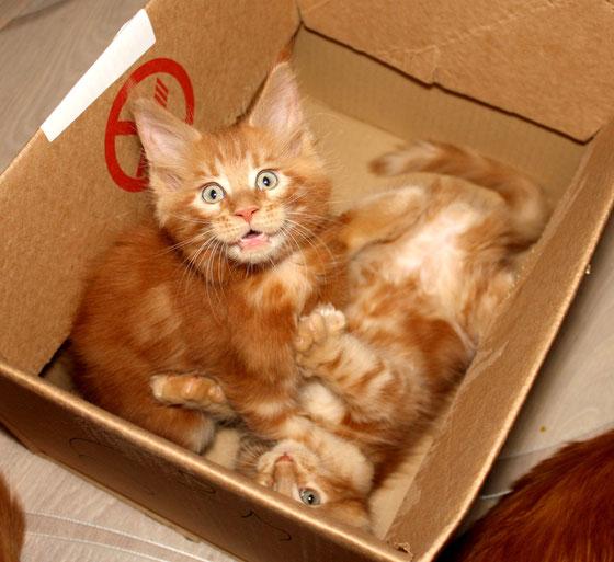 Мы не отправляем своих котят без сопровождения.
