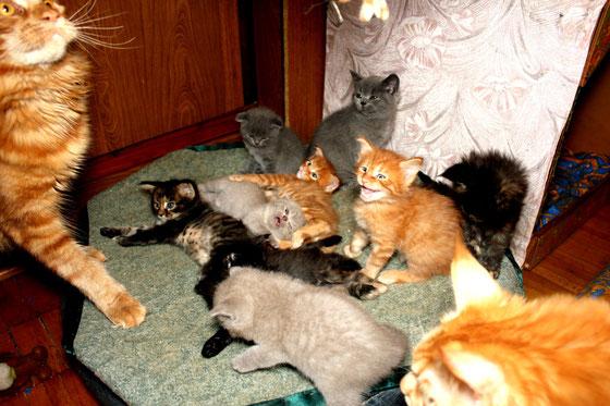 Детский сад у кошек