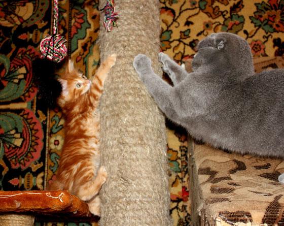 Обучение кошачьему этикету.