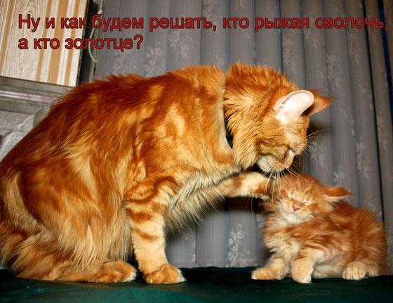 Кошка и котенок мейн кун из питомника.