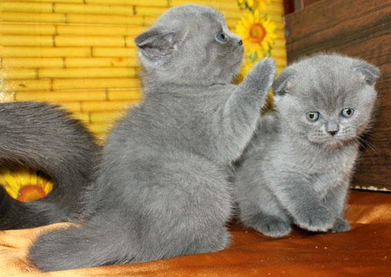 Школа кошачьего мастерства. Отличник.