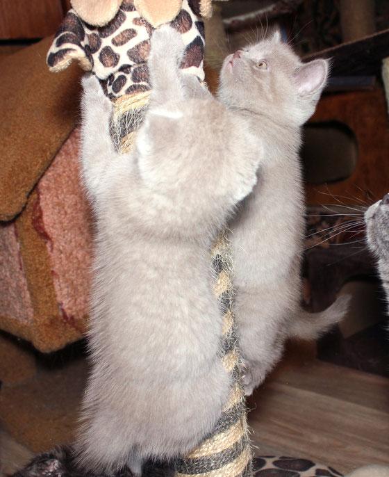 Кошки на ёлке