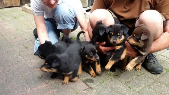 Sie werden so schnell groß, schon 5 Wochen alt, die Kleinen.