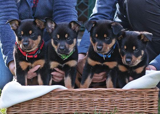 von links: dynamic Cleo, Asta, Dingo und Finn