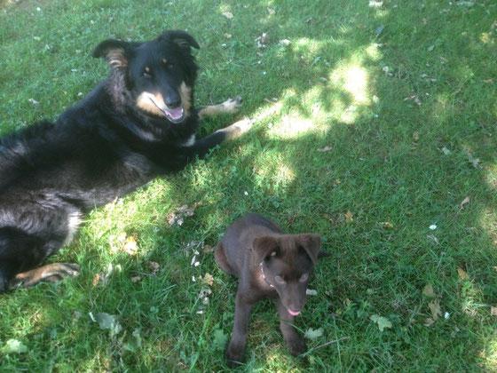 Lilly mit Peters Altdeutschem Schäferhund