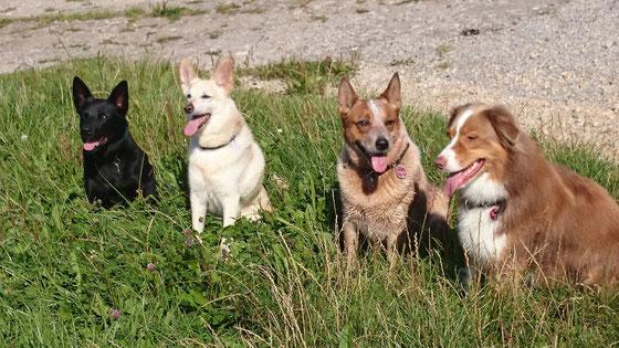Ayra, Berry, Ira und Grace