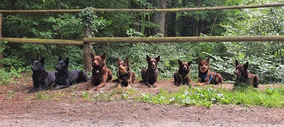 Ayra, Camie, Arrow, Ruby, March, Camira, Joy und Tayro