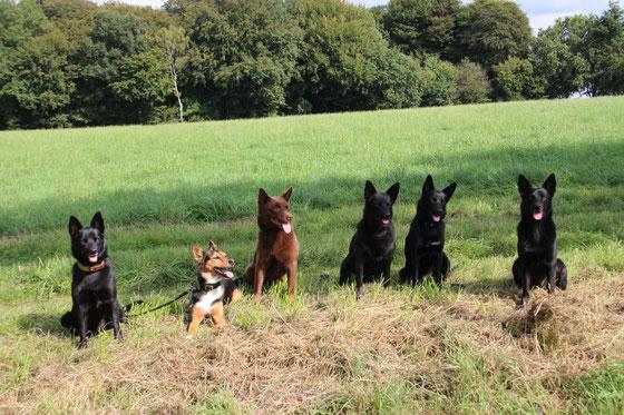 von links: Bella, Miwa, Arrow, Ayra, Camie und Amy