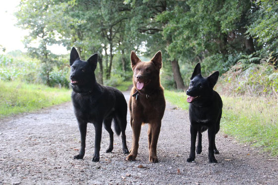 Ayra, Arrow und Camie