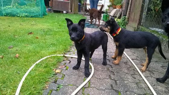 Barnaby rechts, mit seiner Schwester Bella Donna, links.