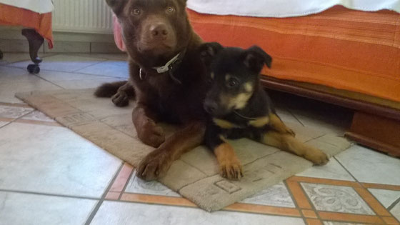 Barnaby mit seinem großem Bruder Arrow