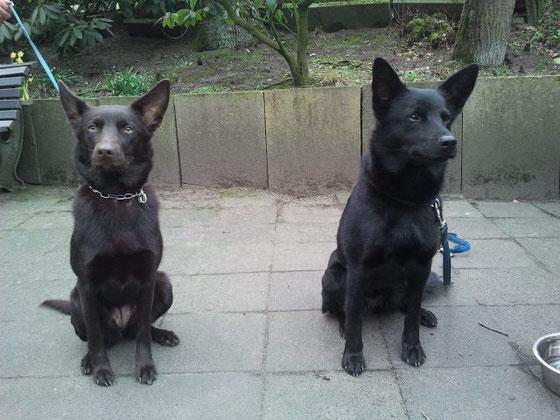 March 1 Jahr alt und Ayra 1,5  Jahre alt