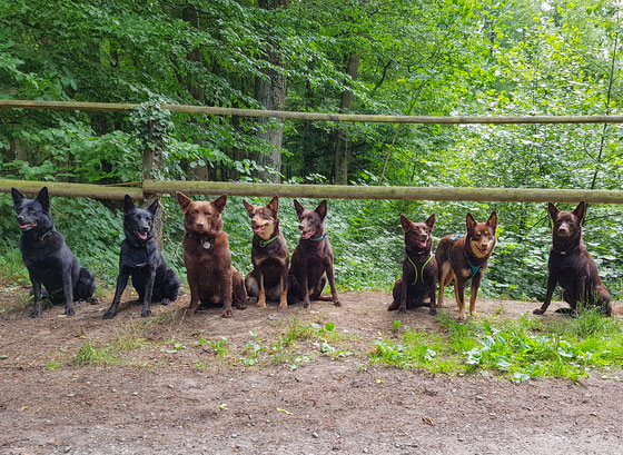von links: Ayra, Camie, Arrow, Ruby, March, Camira, Joy und Tayro