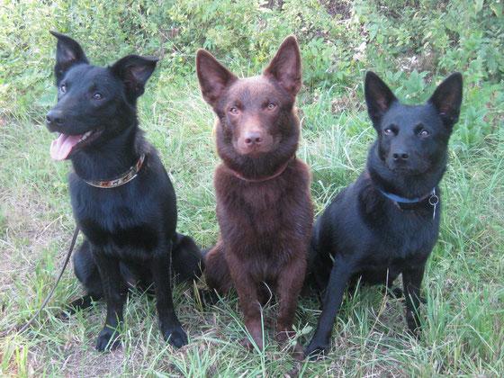 """Mama """"Ayra""""rechts mit ihren großen Söhnen """"A-Sputnik"""" links und """"Arrow"""" in der Mitte."""