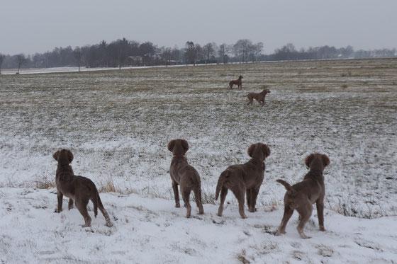 Der Winter hat uns besucht...
