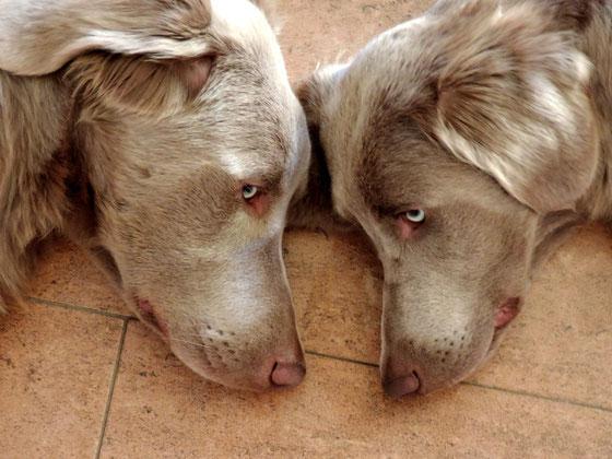 Alf und Afra