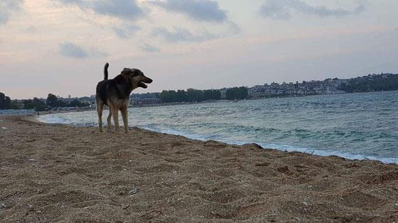 Marley genießt die tolle Aussicht und die frische Luft