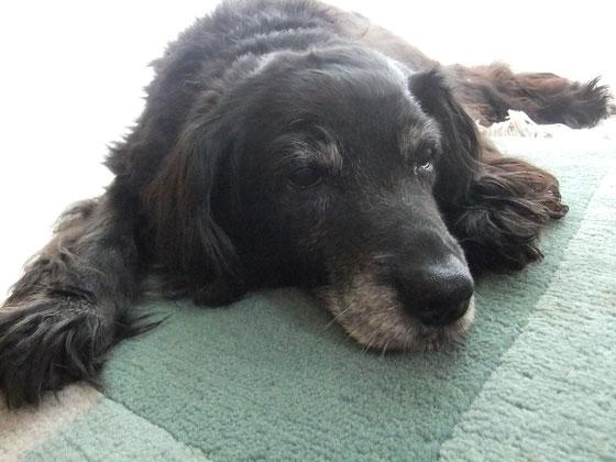 Susi mit 15 Lebensjahren