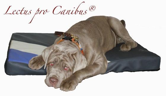 Medizinischer Hundeschlafplatz Lectus pro canibus aus 100% Visko Schaum zum Erhalt der Gesundheit des Bewegungsapparates unserer mittelgroßen und großen Hunderassen wie Labrador und Golden Retriever