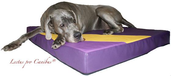 Gesunde orthopädische Hundeliege in hochwertigen Materialien aus dem medizinischen Pflegebereich für große und schwere Hunde wie Deutsche Doggen oder Neufundländer