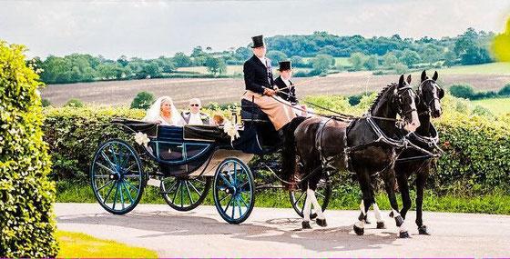 Our beautiful black Gelderlanders and original blue Landau carriage      (Photo courtesy La Boda Photography)