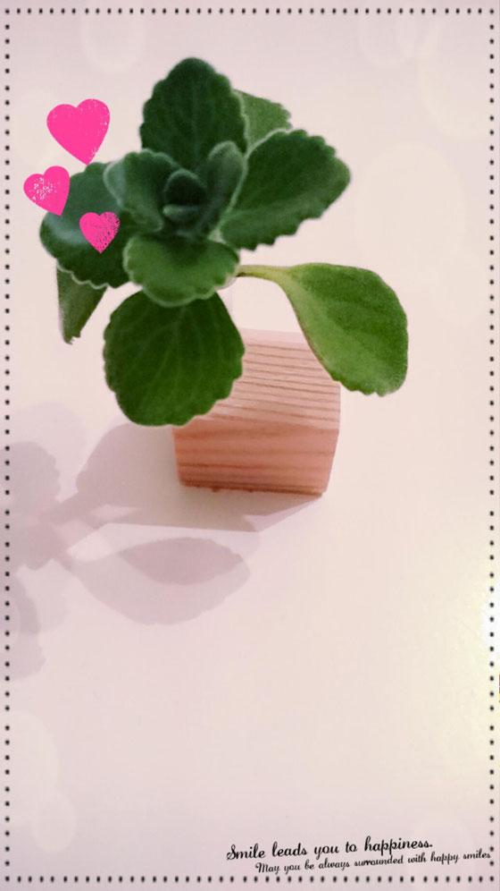 一輪挿しの花瓶