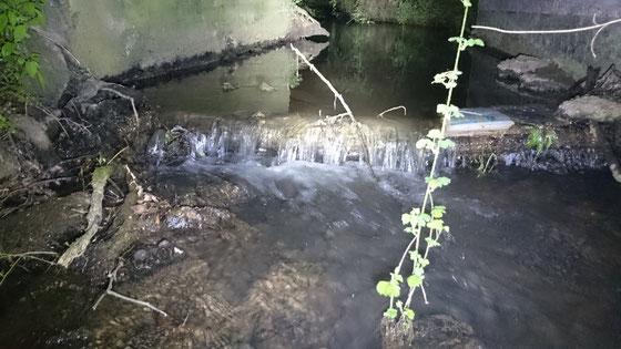 Sohlabstürze können die Wanderungen der Bachneunaugen bachaufwärts behindern.