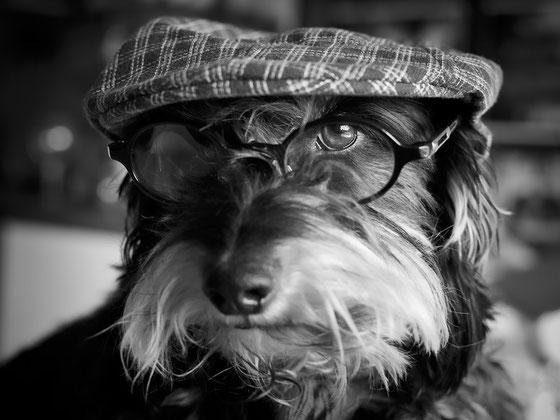 Was Urmel sagt! Das Verständnis von Führung ist auch im zwischenmenschlichen Bereich mitunter haarsträubend. Urmel, einer der besten Hunde der Welt, hat aber natürlich immer recht. ♥
