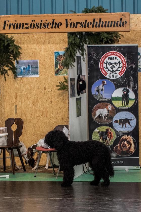 Warum heißt ein Vorstehhund Vorstehhund? Weil er vor dem Stand rumsteht.