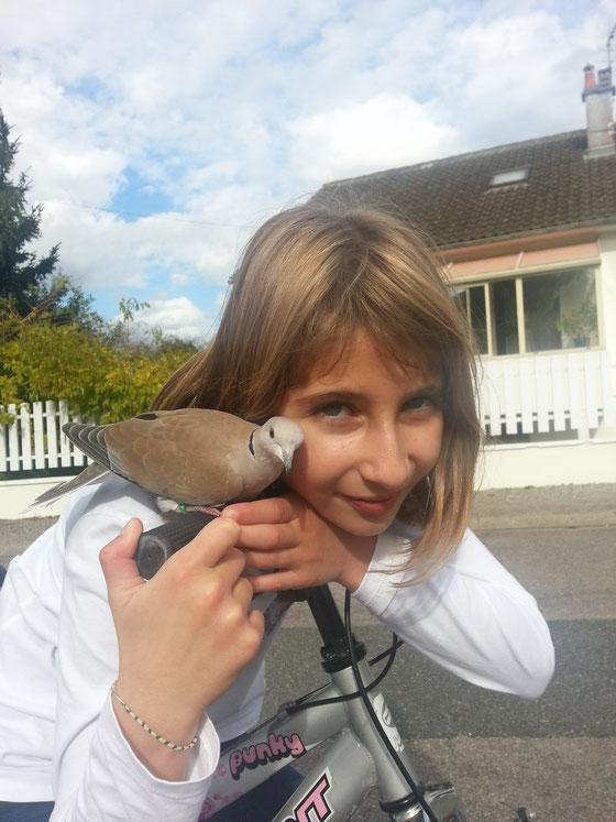 Léa Chéradame et une tourterelle rieuse sauvage prête pour le Tour de France :)