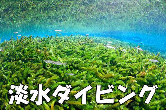 透明度30m超 湧水淡水ダイビング