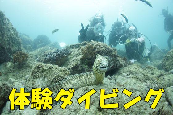 体験ダイビング予約フォーム